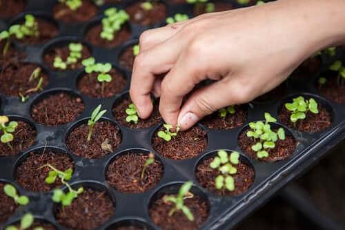 garden starts growing