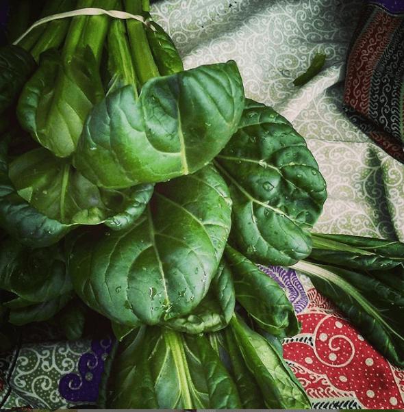 Spinach buschell