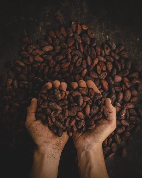 Hands holding plant based protein
