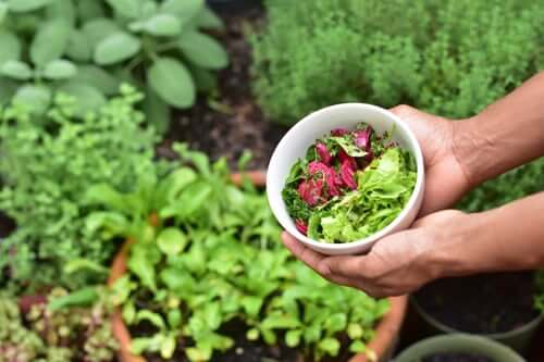 hands holding bowl in garden