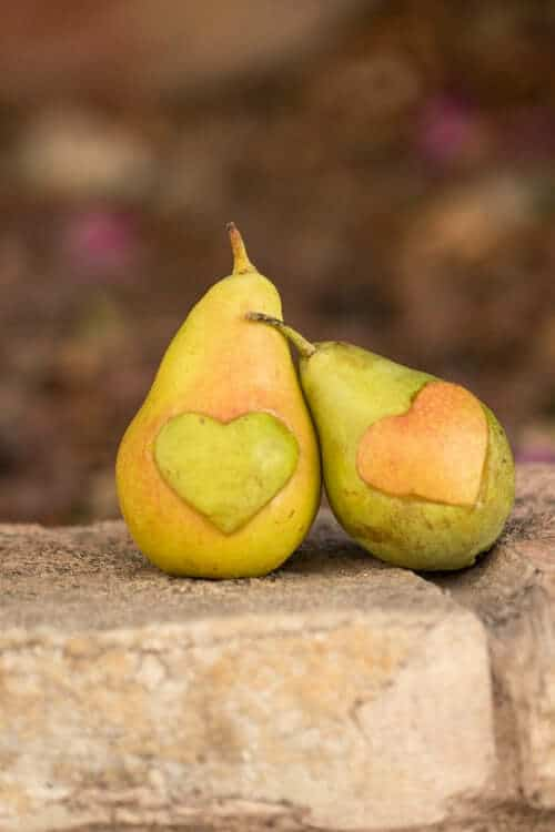 Two pears on cement